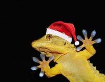与招呼大家的圣诞老人帽子的壁虎 免版税库存照片