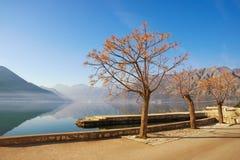 与拣树树的冬天地中海风景 免版税库存图片