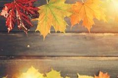 与拷贝空间的湿秋叶构思设计 免版税库存照片
