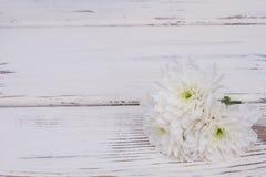 与拷贝空间的白色精美花 图库摄影