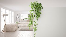 与拷贝空间,有盆的植物的,当代客厅前景白色墙壁的绿色室内设计概念背景 免版税库存图片