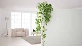 与拷贝空间,有盆的植物的,当代白色客厅前景白色墙壁的绿色室内设计概念背景 皇族释放例证