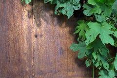 与拷贝空间的土气金属纹理与自然草本上升的植物框架在阳光下 图库摄影