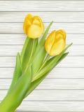 与拷贝空间的黄色郁金香 10 eps 免版税库存图片