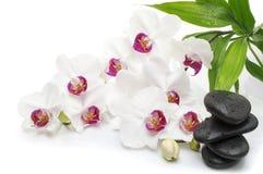 与按摩石头的温泉白色兰花在白色 库存图片