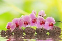 与按摩石头和水反射的兰花 库存图片