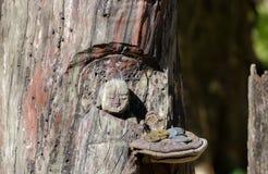 与捐赠的硬币的木菩萨雕塑在镰仓 库存图片