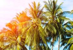 与掌上型计算机的热带横向 在蓝天的棕榈树冠 晴朗的热带海岛减速火箭的被定调子的照片 图库摄影