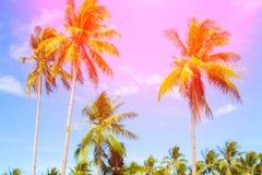 与掌上型计算机的热带横向 在蓝天的棕榈树冠 晴朗的热带海岛定了调子照片 免版税库存照片