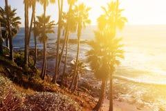 与掌上型计算机的热带横向 在蓝天的棕榈树冠 Sunn 免版税库存图片