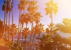 与掌上型计算机的热带横向 在蓝天的棕榈树冠 Sunn 图库摄影