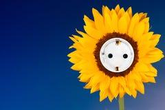 与插口横向格式的向日葵 免版税库存照片