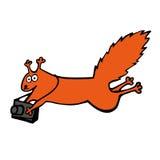 与摄影照相机的传染媒介滑稽的红松鼠 免版税库存照片