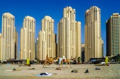 与摩天大楼和骆驼的迪拜地平线在海滩 库存照片
