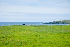 与操舵的苏格兰绿色风景和海在背景中咆哮 免版税图库摄影