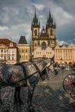 与支架的灰色马游人的在布拉格Staromestske Namesti广场  免版税库存照片