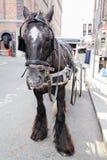 与支架的马在街道关闭 免版税库存照片