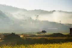 与支架走往中国村庄的一头黄牛或母牛的剪影 免版税库存图片
