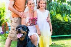 与收获樱桃的狗的家庭在庭院里 库存照片