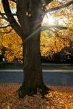 与改变的foilage的树在秋天 图库摄影