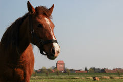 与教会的马在背景中 图库摄影