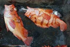 与敞开的嘴的鱼 免版税库存照片
