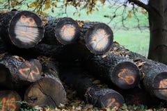 与数字的秋天木堆背景 免版税库存图片