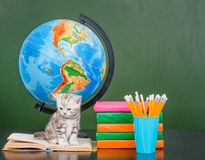 与文具的小猫在空的绿色黑板附近 免版税库存照片