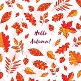 与文本你好秋天的手拉的秋叶 与秋天叶子的背景 森林设计元素 库存照片