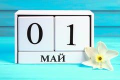 与文本的白色木日历在俄语:5月1日 黄水仙白花在一张蓝色木桌上的 劳动节和春天 免版税库存图片