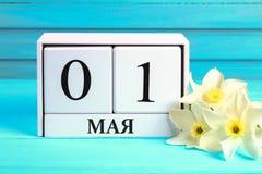 与文本的白色木日历在俄语:5月1日 黄水仙白花在一张蓝色木桌上的 劳动节和春天 免版税图库摄影
