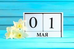 与文本的白色木日历在俄语:5月1日 黄水仙白花在一张蓝色木桌上的 劳动节和春天 图库摄影