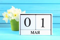 与文本的白色木日历在俄语:5月1日 黄水仙白花在一张蓝色木桌上的 劳动节和春天 库存照片