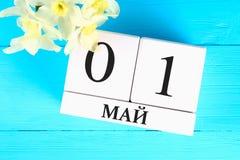 与文本的白色木日历在俄语:5月1日 黄水仙白花在一张蓝色木桌上的 劳动节和春天 免版税库存照片
