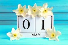 与文本的白色木日历:5月1日 黄水仙白花在一张蓝色木桌上的 劳动节和春天 库存图片