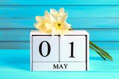 与文本的白色木日历:5月1日 黄水仙白花在一张蓝色木桌上的 劳动节和春天 图库摄影