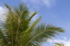 与文本空间的椰树棕榈叶横幅模板 在热带海岛上的晴天 异乎寻常的节假日 免版税库存图片