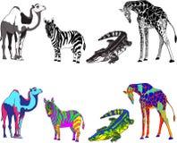 与斑马,长颈鹿,鳄鱼和骆驼的图象的例证,使黑,白色和明亮的不同的颜色 免版税库存照片