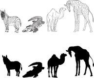 与斑马,长颈鹿,鳄鱼和骆驼的图象的例证,做了等高和剪影 黑色白色 库存照片