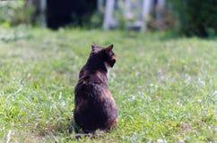 与斜眼看的嫉妒的龟甲猫户外在阳光下 库存图片