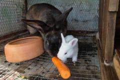 与新出生的兔宝宝的母亲兔子 免版税库存照片