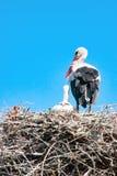 与新出生的小小狗的成人鹳在它的巢 免版税库存照片