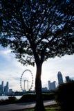 与新加坡飞行物的树剪影 免版税库存图片