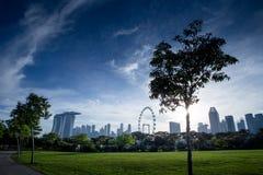 与新加坡飞行物的树剪影 库存照片