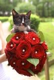 与新娘红色玫瑰花束的黑小猫 图库摄影