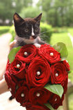 与新娘红色玫瑰花束的黑小猫 库存照片