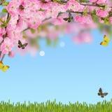 与新春天开花的树的明信片和y的空的地方 库存照片