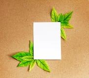 与新春天绿色叶子borde的白色白纸板料 库存图片
