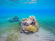 与新的珊瑚礁和seabottom的水下的风景 沙子与绿色海草的海底 库存照片