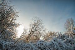 与新近地下落的雪的树 库存照片